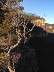 On Carlon Head ([S u m m i t] s c a p e) Tags: australia bushwalking newsouthwales megalong narrowneckplateau ubmbc carlonhead