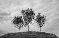 Three tree (balintmolnar1) Tags: rome beautiful streetphotograhpy lumixgh4 gh4 canon colosseum pinokio fountain river fruits guard sunset stairs bnwphotography motor vespa reflection