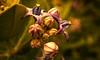 Different (Rajavelu1) Tags: flowers colours different plant art artland creative canon60d nature beautyofnature