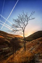 Tree vs The Sky Vandals (paulnadin) Tags: aeroplane trails