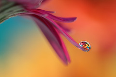 Wave (Marilena Fattore) Tags: macro artistic canon 650 tamron 90mm colors water drops nature closeup focus petals floralart bokeh droplet pink orange lightblue pastel softness yellow flower garden
