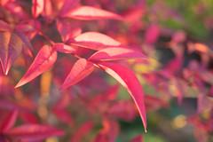 PC105617.jpg (plasticskin2001) Tags: leaf