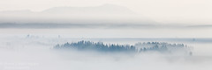 Teton Fogscape (Hank Christensen) Tags: 31aspectratio trees usa natural landscape outside northamerica nature nationalpark stock fog outdoor unitedstates grandtetons grandtetonsnationalpark wyoming