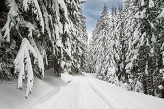 Trillium Lake Trail (Mike Moss) Tags: snowshoeing trilliumlake