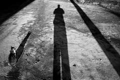 Shadows (-Aldievel-) Tags: italy leica blackandwhite light sunset italia lights cat monochrome shadows molise tramonto stilllife luce ombre luci gatto biancoenero ombra matese dlux3 appennines appenninosannita appennini