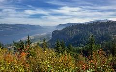 Views of the Columbia River at Chanticleer Point (thor_mark ) Tags: nikond800e day8 capturenx2edited colorefexpro triptomountrainierandcolumbiarivergorge columbiarivergorge columbiarivergorgenationalscenicarea columbiariverhwy usroute30 historiccolumbiariverhighway historiccolumbiariverhighwayscenicbyway project365 nature portfolio canvas nationalscenicarea hillside hillsideoftrees trees blueskieswithclouds angelsrest mounthoodarea oregoncascades cascaderange pacificranges chanticleerpoint overlook columbiariver river lookingtovistahouse vistahouseoffindistance lookingtocrownpoint crownpointoffindistance portlandwomensforumstate sandisland lookingeast or unitedstates