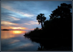 Blue sunset (edenseekr) Tags: blue sunset bayport florida palms silhouettes gulfofmexico