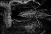 Untitled... (l1ze) Tags: 28mm blackwhite blackandwhite dk danmark denmark leica leicam leicam9p monocrome odsherred sanddobberne sjælland winter zealand blackandwhitephoto blackandwhitephotos bw l1ze lennartjoern