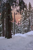 Twilight in the mountains and a long way home (z.dorighi) Tags: winter snow frost hoar cold travel walk trees woods trail touristic moon light sky poland mountains babia gora beskidy