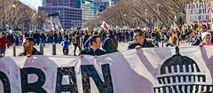 2017.02.04 No Muslim Ban 2, Washington, DC USA 00470