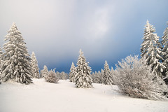 Black Forest - Cold Dream (TM Photography Vision) Tags: basel riehen schweiz schwarzwald blackforest landscape landschaft schnee snow wald tannen winter sony alpha 99 minolta 1735 südbaden deutschland germany
