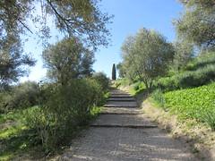 Path to the archeological site, Volubilis, Morocco (Paul McClure DC) Tags: morocco almaghrib fèsmeknèsregion volubilis jan2017 roman architecture historic scenery