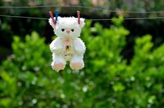 Dia de Banho (FernandoPaoliello) Tags: banho pelúcia ursinho varal brinquedo urso ursodepelucia nikonflickraward nikon nikon7000 d7000