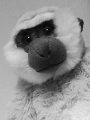 Roger Toy Monkey Ely Feb 2017 (Uncle Money UK) Tags: roger toy monkey black white blackandwhite ely february 2017
