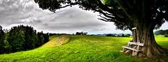🌳Majestätisch, Bergahorn (02)!  📷 G6 Panorama (Swiss.Piton (BH&SC)) Tags: panorama tree green schweiz switzerland outdoor ostschweiz panoramic stitching grün baum wanderweg toggenburg myswitzerland beautifulshot shotforfun justmeandmycamera kantonstgallen greatpano bergahorn travelerphotos thelonelybench theworldthroughphotography ibringmycameraeverywhere microfourthird panasoniclumixlovers 14mm25 m43photography ilovephotografie dmcg6lumix lumixg6l14mm25 2x1panoramastitching panorama2x1