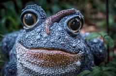 Sluggish (Michael Kline) Tags: june roanoke va toad slug slimy 2015 sluglife