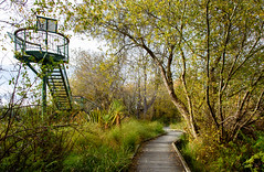 The Lookout (Jocey K) Tags: autumn trees newzealand christchurch sky clouds path lookout walkway wetlands traviswetlandnatureheritagepark
