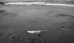 Metamorphose (harrimuu) Tags: beach germany prora rugen samyang14mm