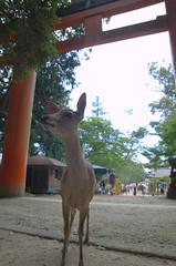 Deer before a shrine
