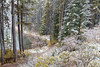 Snowfall (Kirk Lougheed) Tags: alberta banff banffnationalpark canada canadian canadianrockies canadien herbertlake icefieldsparkway autumn fall landscape nationalpark outdoor snow