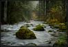 Right Down The Creek (Ernie Misner) Tags: f8andbringinthenewyear skatecreek washington erniemisner nikon d800 lightroom nik photoshop capturenx2