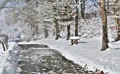 ~~ Tombe, tombe la neige... ~~ (Joélisa) Tags: neige snow hiver chemin path camino banc flocons février2015