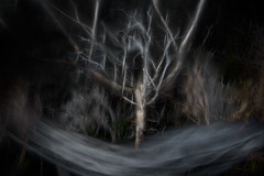 Metamorphosis (gogos_yiannis) Tags: nature tree surreal multipleexposures icm