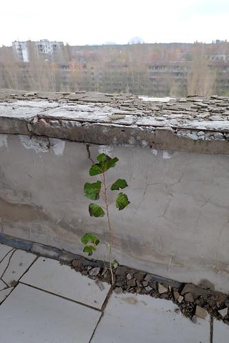 "Polissya Hotel - Pripyat • <a style=""font-size:0.8em;"" href=""http://www.flickr.com/photos/148075881@N07/31959011053/"" target=""_blank"">View on Flickr</a>"