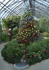 my favorite Christmas tree at Longwood Gardens (tcd123usa) Tags: longwoodgardens pennsylvania leicadlux4 winter2017