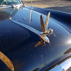 Packard Clipper (D. Brigham) Tags: packard clipper classiccar hoodornament swan auto americancar eastboston massachusetts sweetride