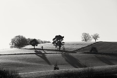 Wintermorgen (derChambre) Tags: winter schnee schwarzweiss baum wiese morgenstimmung morgenlicht sonnenaufgang