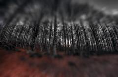 #168 (mariopolicorsi) Tags: monte monteamiata grosseto italia italy maremma toscana tuscany mariopolicorsi canon eos 700d fisheye samyang 8mm hdr hdraward simplysuperb inverno winter natura nature december dicembre europa europe alberi trees photoshop photomatix landscapes wood macro