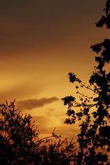 Evening Sky (Deeble) Tags: sunset sky orange slr photography evening warm afternoon shadows settingsun richlight