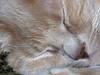Isn't She A Sweetie! (Foxicat) Tags: arizona cat interestingness foxicat sleep fiona sillysaturday interestingness48 i500 explore18feb05