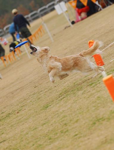 Frisbeedogs #1