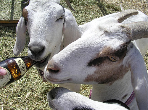 National Give a Goat a Beer Day by Jean&Vic.