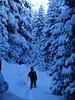 Exploring the old forests of Rila Mountains (Odysseia In Travel) Tags: ski offpiste skitouring bulgaria rilamountains