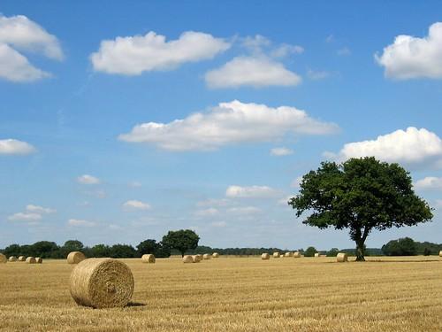 Hertfordshire Harvest 4