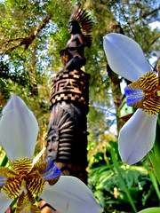 Flowers for a Silent War - VI (carf) Tags: life flowers brazil nature brasil garden inmemory death hope community hummingbird gardenofeden forsakenpeople esperana social totem spirits jardim totempole indians elton beijaflor ecbf