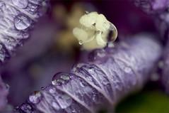 (α) Tags: water drop flower