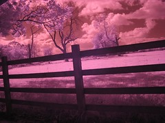 infra-red @ the office (tricky (rick harrison)) Tags: ir infrared sky trees infra red filter clouds strange fence
