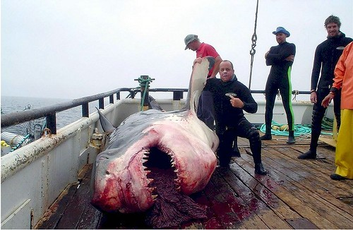 Great White Shark Killed in Mexico