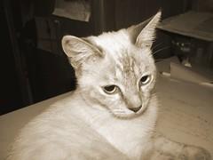 My favourite cat (marcopriz) Tags: cat animal animals pets bw eyes deleteme deleteme2 deleteme3 deleteme4 deleteme5 saveme deleteme6 deleteme7 deleteme8 deleteme9 deleteme10