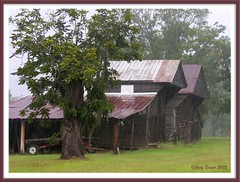 Old Barn in the Rain (Old Shoe Woman) Tags: usa georgia southgeorgia dilosep05 oldbarn rain dilosept05