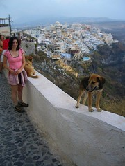 Naughty Cliff Puppies on Santorini (ARKNTINA) Tags: dogs island puppies europe christina hellas santorini greece tina cyclades fira catsanddogs cycladicislands tinasolo random6 gr05