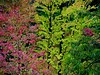 (~~) (Abra K.) Tags: autumn trees poetry poem ~~ colored poesia saudades emilydickinson leaved