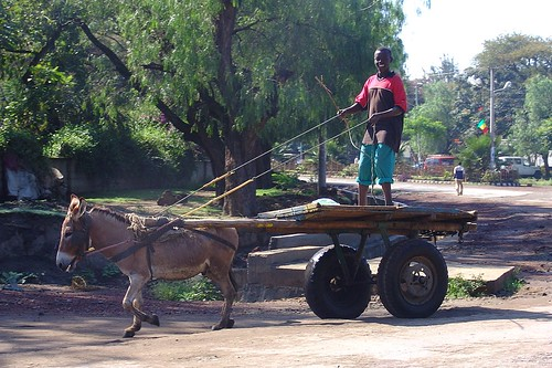 Donkey and cart, Awassa