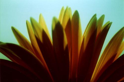 xpro.daisy