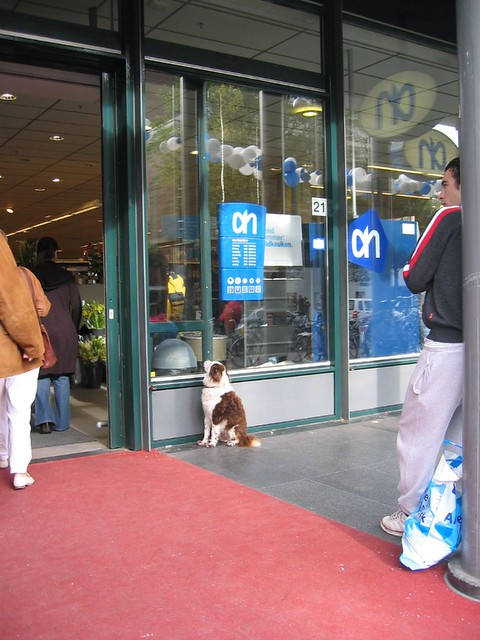"AH-erlebnis in Amsterdam / A for ""A dog at Albert Heyn's supermarket!"""
