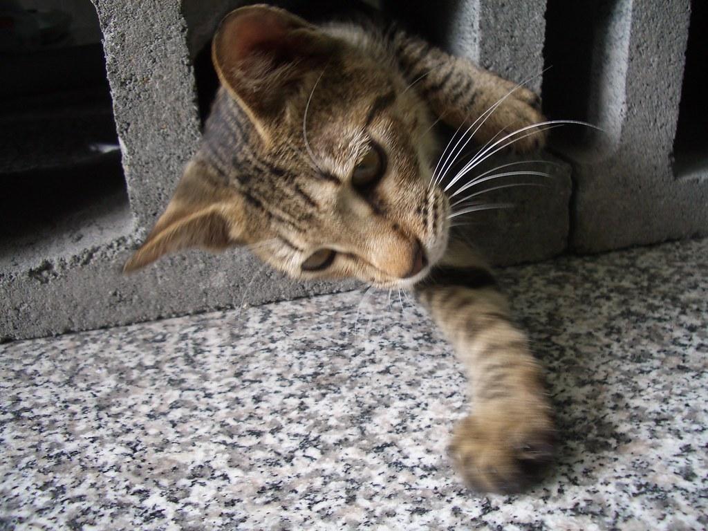 愛玩耍的小小貓